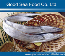 Frozen Ribbon fish whole round