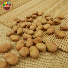 Chinese wholesale dry broad beans fava bean faba bean with good price