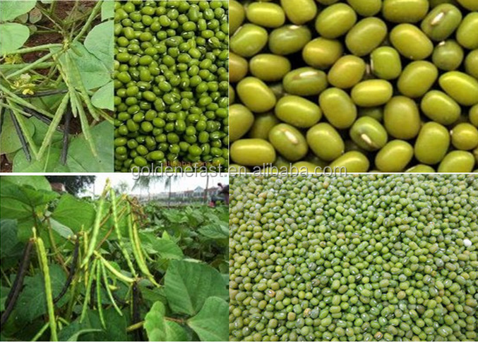 2015 price for green mung beans specification