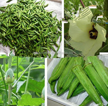 Health care product dried okra extract powder of high quality