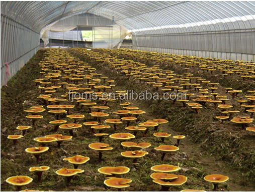 hydroponic black and white film for mushroom greenhouse