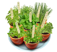 ronud hot pot/potted herb garden gift/bio pot 7 in one