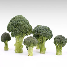 China BRC Haccp bulk wholesale price factory supplier manufacturer frozen broccoli