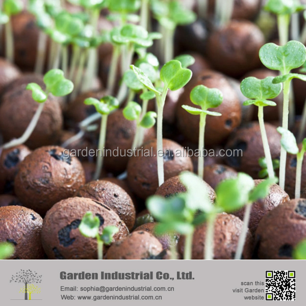 expanded soiless growing media clay pebbles