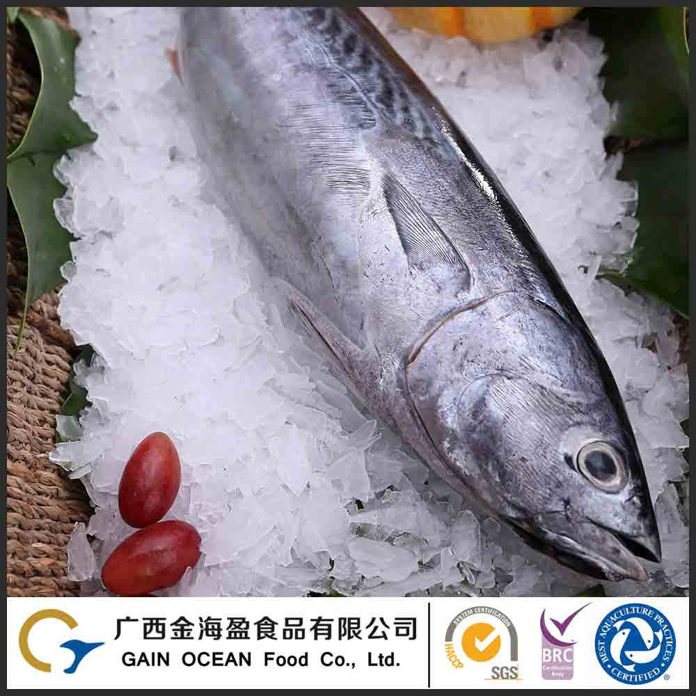 Natural Sea Food Manufacture Supplied Cheap Frozen Bonito Seafood