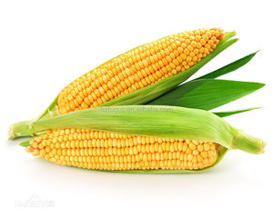 Corn Starch / Maize Starch Industrial Grade
