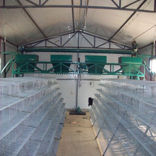 poultry layer quail battery cages