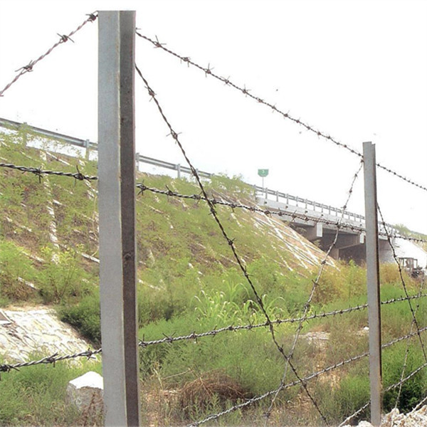 barbed wire  600 (1)