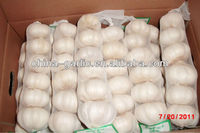 new corp fresh garlic in cold storage in china for export with best quality garlic