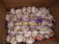 Garlic Pakistan 2011 China (Size 5,5.5,6 CM UP)