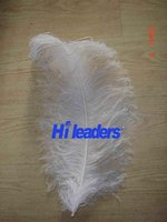 Wholesale White 45-50cm Male Ostrich Feather