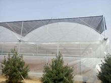 Large Agricultural Multi Span Plastic Covering Film Greenhouse
