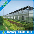 polycarbonate hollow sheet covering Multi-tunnel Greenhouse