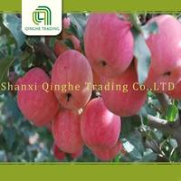 fresh apple sell year 2014 yantai fresh red fuji apple china fuji apple supplier