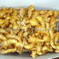 Chinese Fresh Ginger Exporters Europe Southeast