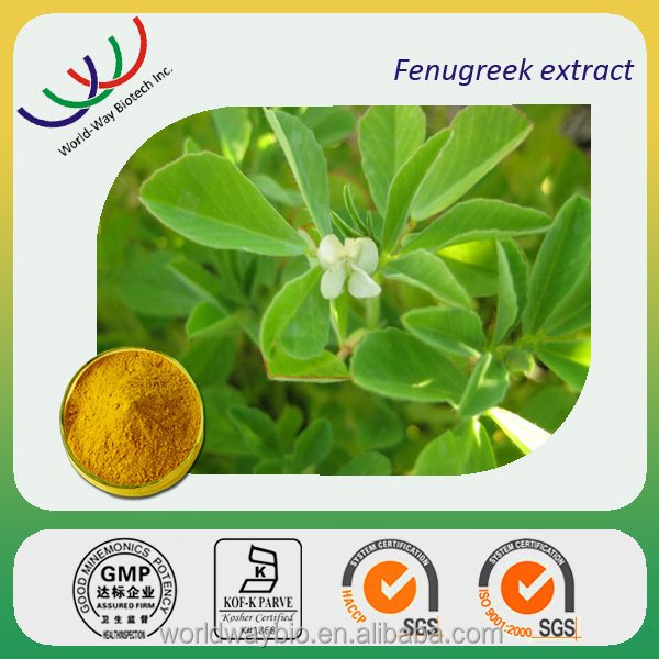 Chinese herb 100% organic fenugreek extract powder