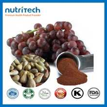 GMP Certified OPC 95% Bulk Grape Seed Extract Powder