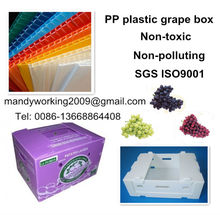 PP corflute box for packaging grape, PP corrugated plastic grape packaging box