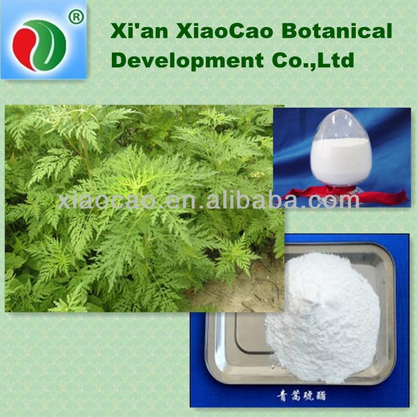 Natural Artemisia annua Extract Artesunate