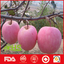 wholesale export fruit fresh fuji apples sweet apples organic apples from china