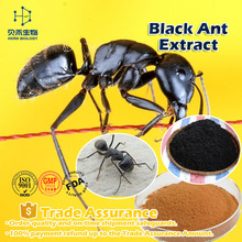 High quality 98% 10:1 20:1 sex power capsule Black Ant Extract health care product Black Ant capsule