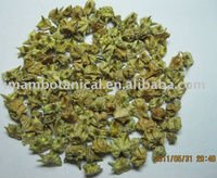 Tribulus terr. ( freshly dried and extract)