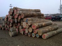 "Northern Black Ash Veneer Logs 13"" & Bigger"
