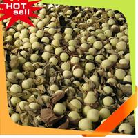 Professional Fruit Supplier buy cashew fruit