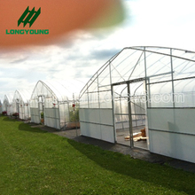 Commercial Easy Frame Agricultural Film Poly Tunnel Greenhouse
