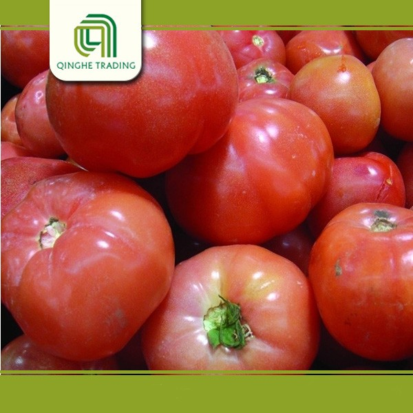 fresh and good price for tomatoes with CE certificate