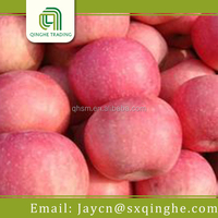fresh fuji apple fruit specification