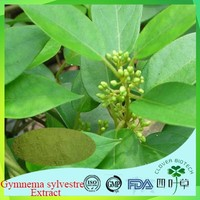 BV Certificated buy gymnema sylvestre plant with low price