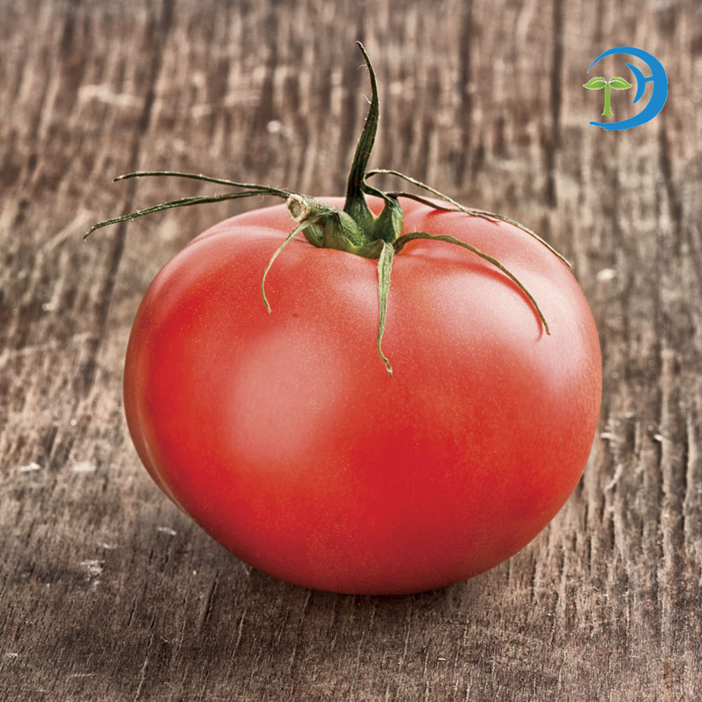2016 Red and pink color NO.JP-09 hybrid tomato seeds for sale
