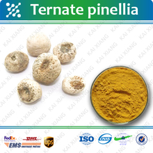 High Quality 10:1, Radix Rehmanniae Preparata P.E./Radix Rehmanniae Preparata Extract Powder