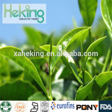 Organic Natural Oolong Tea Extract