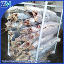 stripe marlin HGT 30kg+ frozen fish red marlin hot sale