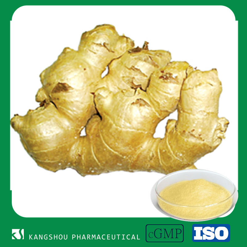 Food supplement and health-care product ginger extract 1%-5% gigerols
