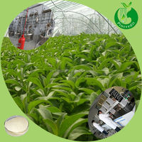 Top quality natural stevia leaf extract