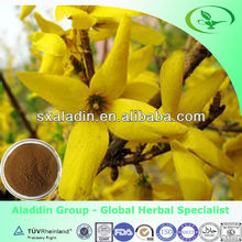 100% Natural Forsythia suspensa fruit extract / fructus forsythiae extract