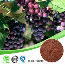 grape seed plant extract powder /grape seed extract manufacturers / factory supply grape seed extract opc 95% 98%