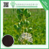 China wholesale 8% triterpenoid saponins black cohosh extract 5%-8%