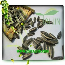 Chinese Raw high quality Sunflower seeds 5009 American type New Corp