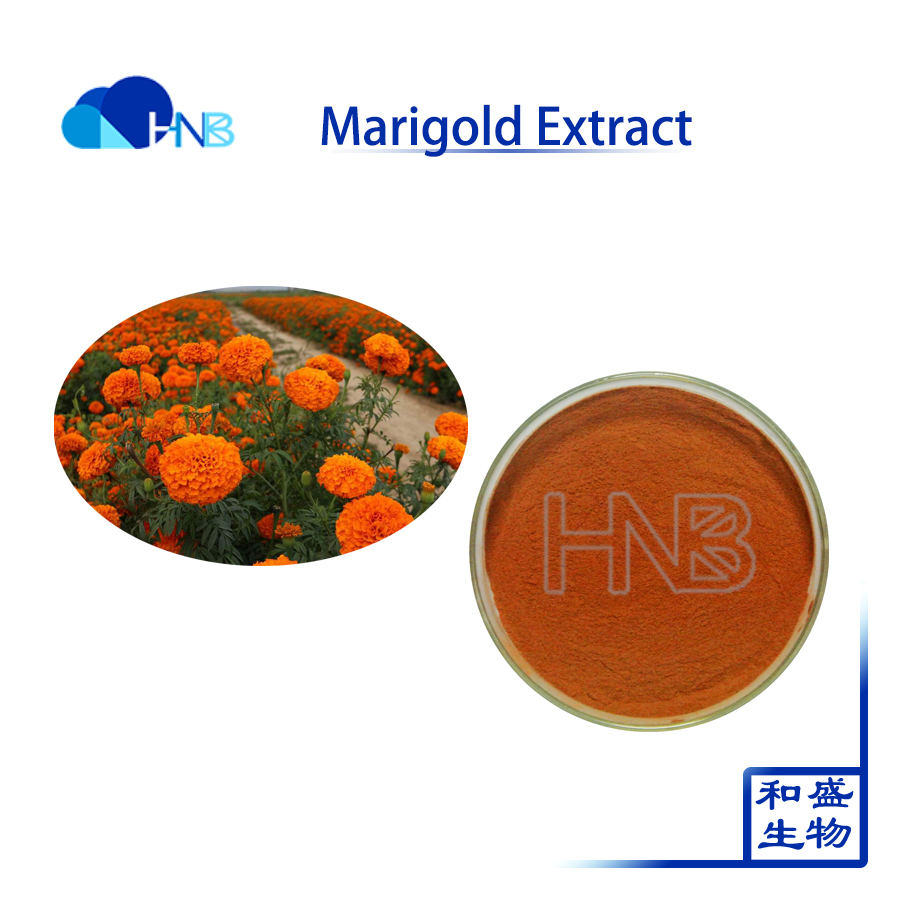 Natural Marigold Extract Lutein xanthophyll with 5% to 90% hplc