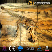 MY DINO-SF59 Simulation Original Size Dinosaur Fossils for Sale