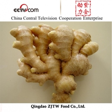 200-250G Shandong Organic Ginger For Sale