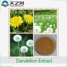 Manufacturer sales mongolian dried dandelion herb extract