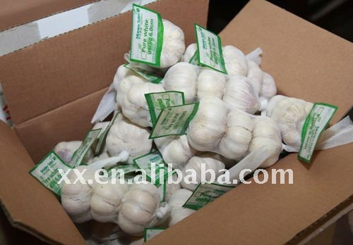 2011 fresh normal garlic market price