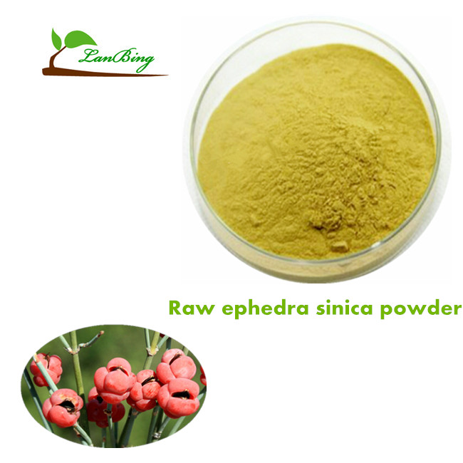 GMP standard high quality raw ephedra sinica materials ephedra powder ma huang powder