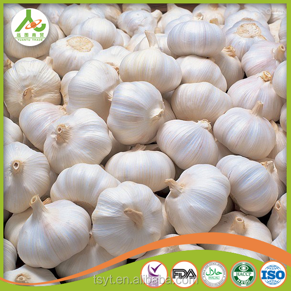 bulk wholesale Jinxiang jining pizhou BEST GARLIC fresh natural garlic normal white 5cm 5.5cm 20kg 23kg 25lg mesh bag