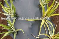 black mulch films for agriculture